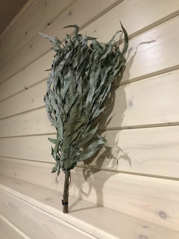 Веник из эвкалипта ивовидного